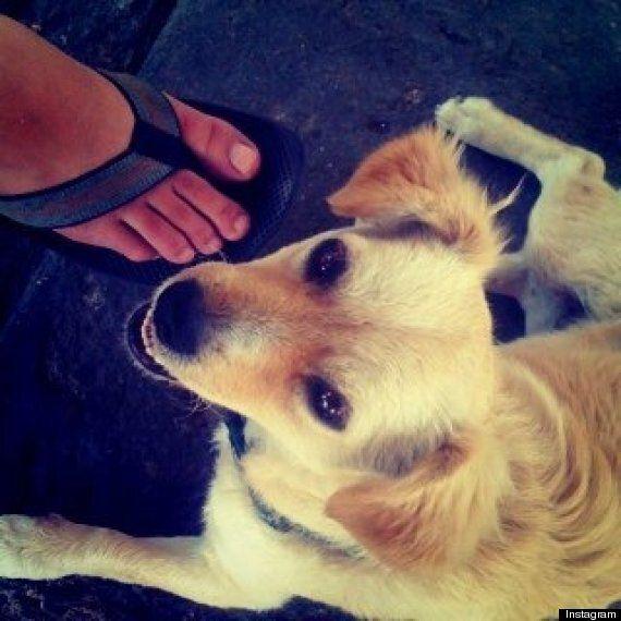 La toute première photo d'Instagram: un chien adorable!