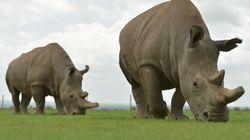 Pour préserver la biodiversité, faut-il sauver toutes les espèces en