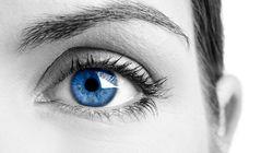 L'orientation sexuelle dans les yeux