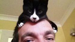Quand les chats se prennent pour des chapeaux!