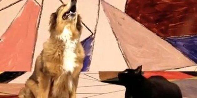 Gotye: «Somebody That I Used To Know» repris par un chien et un chat