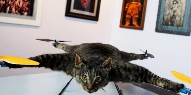 Le chatcoptère: un chat empaillé transformé en hélicoptère