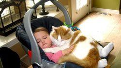 11 chats qui prennent la sécurité routière au