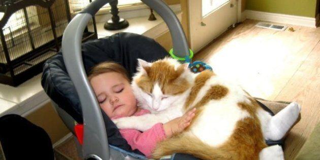 Des chats dans des sièges pour bébés: 11 félins qui prennent la sécurité routière au sérieux