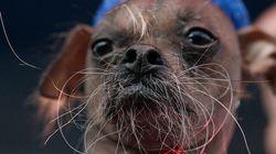 Mugly devient le chien le plus moche du
