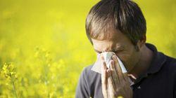 Photos/Vidéo: Allergique? Peut-être pas à