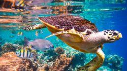 Emergencia natural: un millón de especies, en peligro de extinción