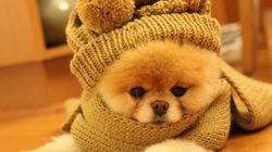 Le chien le plus mignon du monde n'est pas