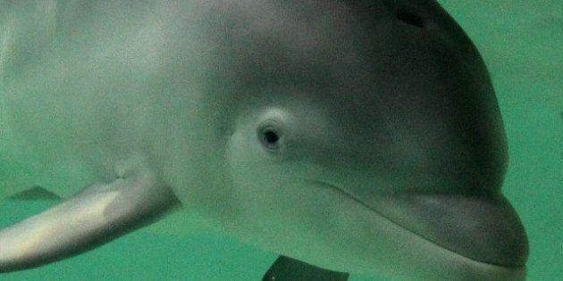 Deux dauphins morts après une overdose