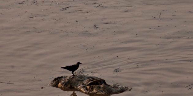 Lotbinière: un corps repêché du fleuve