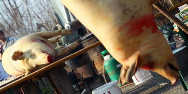 OHRADY, SLOVAK REPUBLIC - MARCH 5: Butchers prepare porks at the traditional folk pig sticking international...