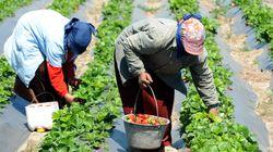 ALECA: La menace plane sur le secteur agricole
