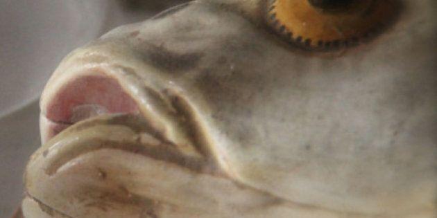 Odeur de poisson: un élève est aspergé de désodorisant par sa