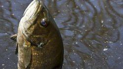 Premier avril: les poissons gigotent!