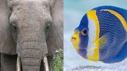 De peces y elefantes (cuestión de