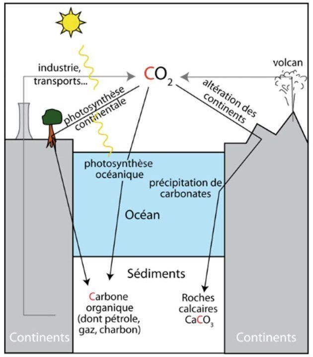 Cycle géologique simplifié du carbone. Les puits (noir) figurent la sédimentation de matière organique et le couplage altération-synthèse de carbonate. Ils s'opposent aux sources (gris): les volcans depuis plus de 4 milliards d'années et les activités humaines thermo-industrielles depuis 150 ans.