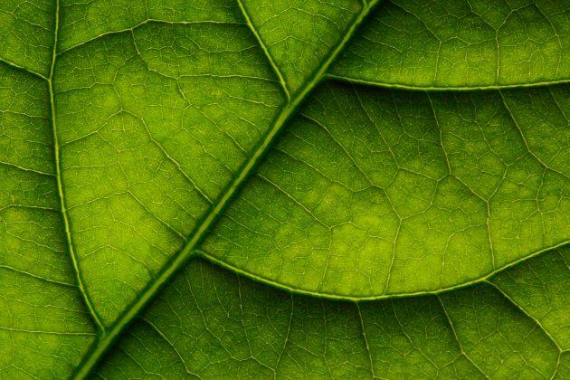 La photosynthèse soustrait du CO₂ de l'atmosphère, participant aux grands cycles de CO₂ sur la