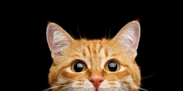 Une chatte retrouvée vivante dans un conteneur après un voyage