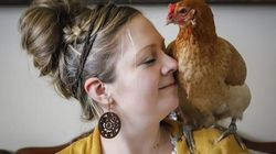Des poulets dans la maison contre