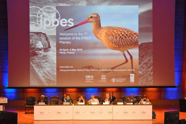 パリで開かれた「生物多様性及び生態系サービスに関する政府間科学政策プラットフォーム」(IPBES)の第7回総会=IPBES広報提供
