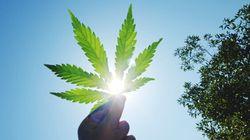 Légalisation du cannabis: au tour des médecins d'urgence de lancer une mise en