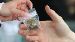 Marijuana: Leitao veut un partage équitable des