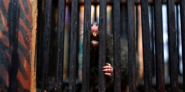 A rat bares its teeth from a cage near a man selling an electronic device, which he claims would scare...