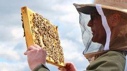 Les abeilles au service de la réinsertion sociale à l'Accueil