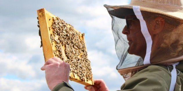 Les abeilles au service de la réinsertion sociale à l'Accueil Bonneau
