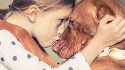 Qui a dit que le nez du chien était meilleur que le