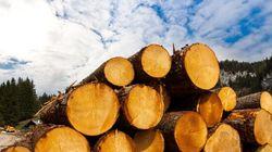 Greenpeace dénonce le groupe forestier