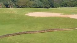 Ces golfeurs ont reçu la visite d'un invité
