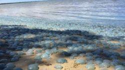Cette plage australienne est un cauchemar pour ceux qui redoutent les