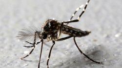 Le virus Zika peut entraîner de graves conséquences neurologiques chez les