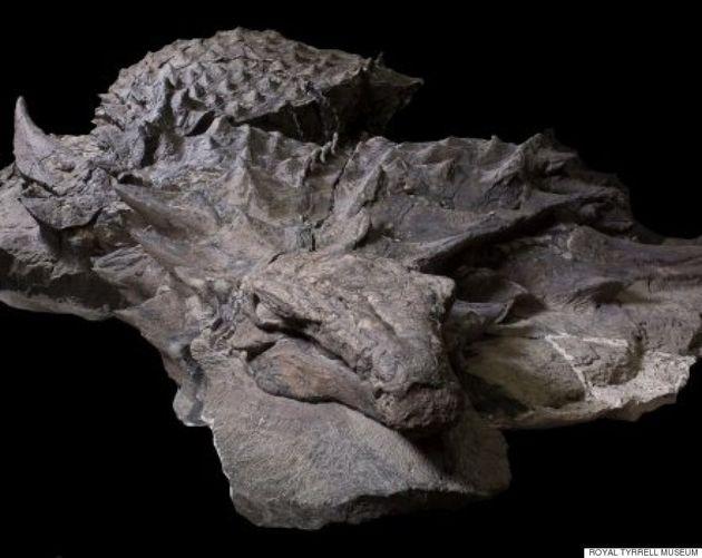 «Momie de dinosaure» trouvée quasi intacte avec sa peau et son repas digéré au Canada