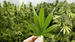 6 questions sur la légalisation de la