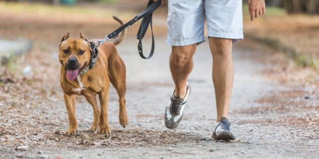 Man walking with his dog at park. Close up view on dog and on the legs of the man holding it on