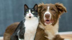 Vous rêvez de manger du chien ou du chat? Taïwan n'est plus la bonne
