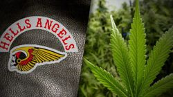 Des Hells Angels produisent de la marijuana médicinale depuis