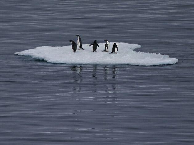 La ONU, SEO/BirdLife y Greenpeace insisten en que todavía se puede revertir el cambio