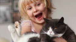 Les chats vous aiment, pour de