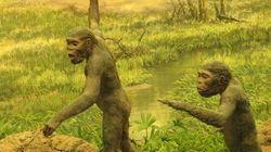 L'homme de Néandertal explorait déjà des grottes il y a 176 500