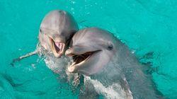 Traduire le langage des dauphins? Cette start-up croit pouvoir y