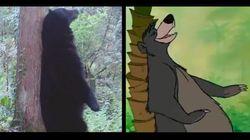Ces ours se prennent pour Baloo
