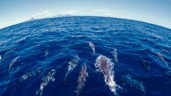 Un dauphin percute violemment ce