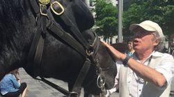 Dernier tour de piste pour les chevaux du Vieux-Montréal