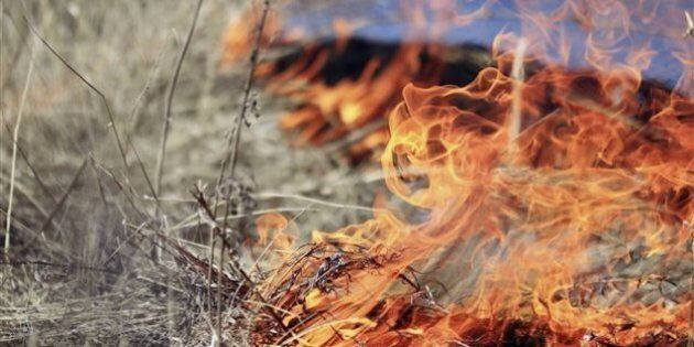 Des risques élevés de feux de forêt au