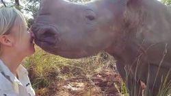 Cette vétérinaire a vraiment un don avec les rhinocéros