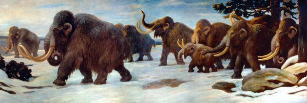 Des chercheurs espèrent ressusciter le mammouth d'ici deux