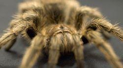 Des araignées sèment la panique dans un avion d'Air